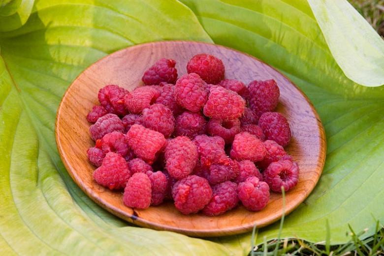 Rubus idaeus 'Heritage', Raspberry 'Heritage', Everbearing Raspberry, Raspberries, Red Berries, Fruiting Shrub