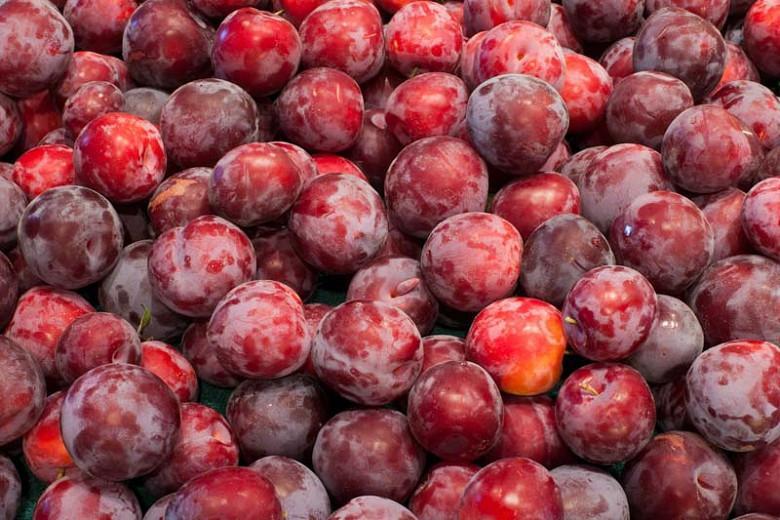 Prunus salicina 'Santa Rosa', Japanese Plum 'Santa Rosa', Santa Rosa Japanese Plum, Flowering Tree, Fruit Tree