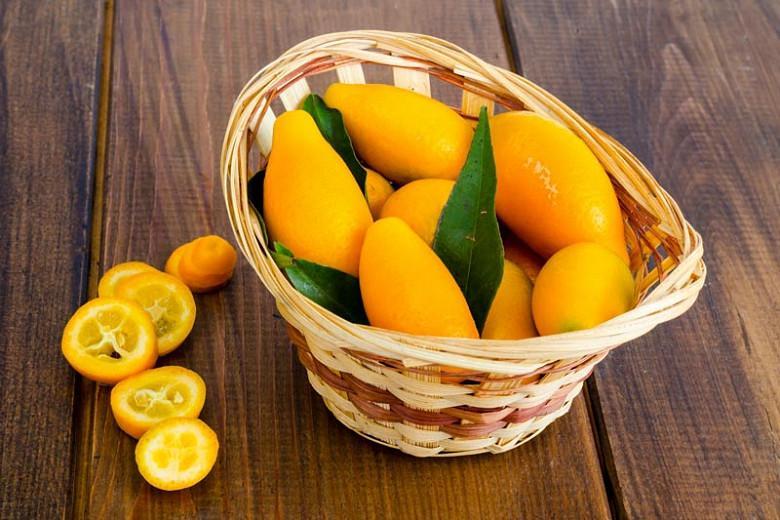 Citrus japonica, Kumquat, Citrus kinokuni, Citrus madurensis, Citrus × nobilis var. inermis, Citrus kumquat, Fortunella hindsii, Fortunella japonica, Fortunella margarita, Fortunella × crassifolia