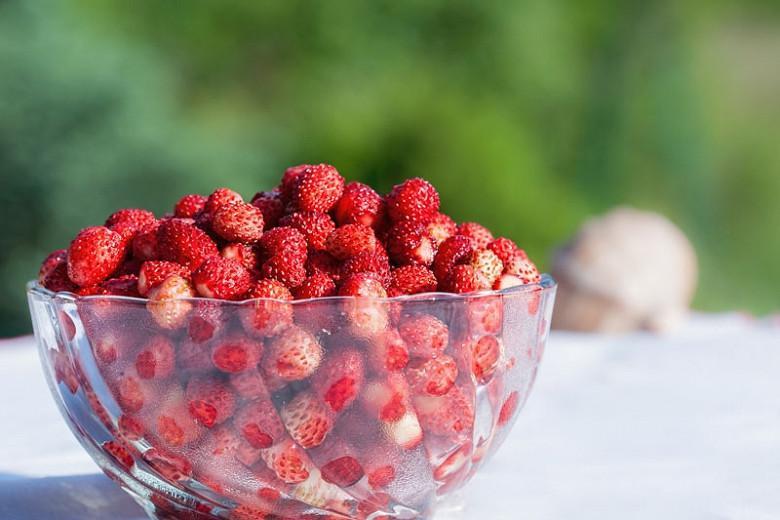 Fragaria vesca, Wild Strawberry, Alpine Strawberry, Fragaria × ananassa Fraise des Bois, Fraise Des Bois, Wood Strawberry, evergreen shrub, Strawberries, Red Fruit, White flowers