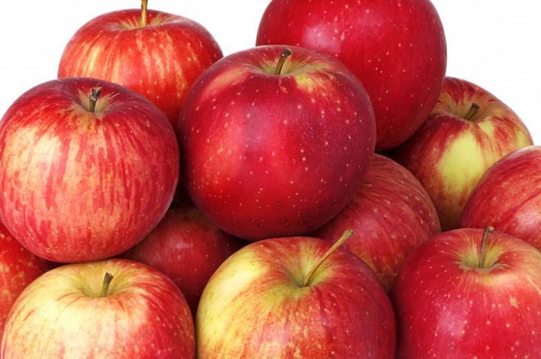 Malus domestica 'Haralson', Apple 'Haralson', Haralson Apple, Malus 'Haralson', Red Apple, White flowers,