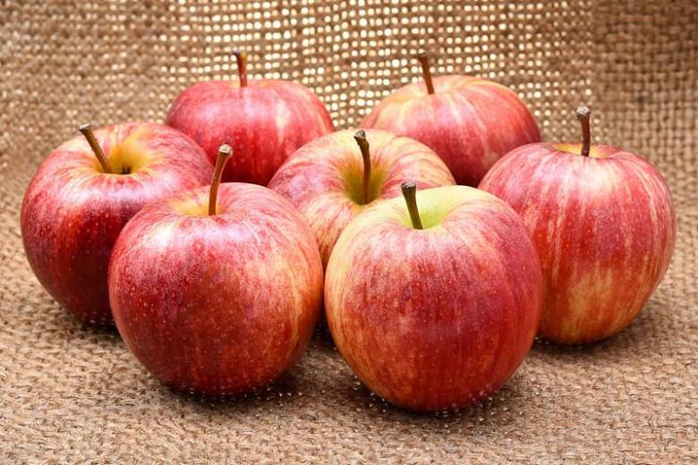 Malus domestica 'Gala', Apple 'Gala', Gala Apple, Malus 'Gala', Red Apple, White flowers,