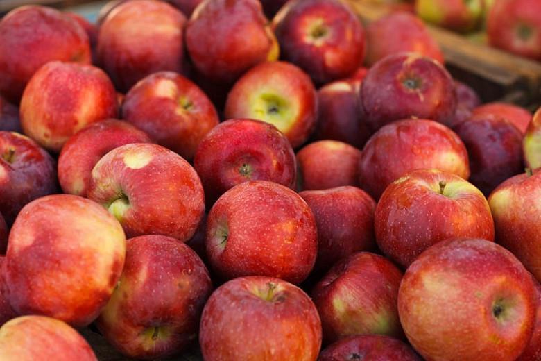 Malus domestica 'Empire', Apple 'Empire', Empire Apple, Malus 'Empire', Red Apple, White flowers,