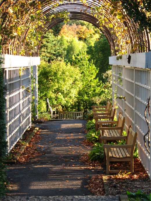 arbor,arches,climbing plants,covered walkway,garden bench,path,patio furniture,trellis ,vines, walkway