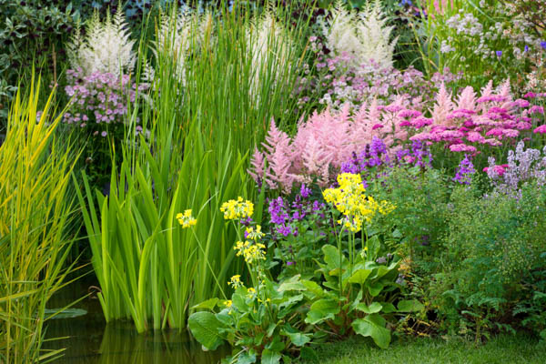 primula candelabra, astilbe Hyacinth, Planting, edge ponds, pink flowers, purple flowers, yellow flowers