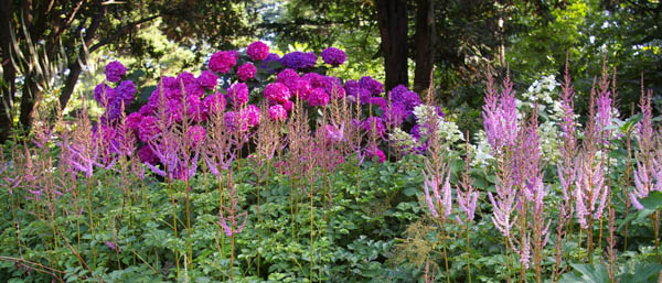 Astilbes, Midseason Astilbes, Late Season Astilbes, Astilbe Bloom Times, Early Season False Spirea, Midseason False Spirea, Late Season False Spirea, False Spirea Bloom Times