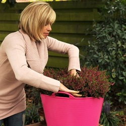 Planting bulbs, planting daffodils, daffodils in pots, daffodils in container, how to plant bulbs in pot
