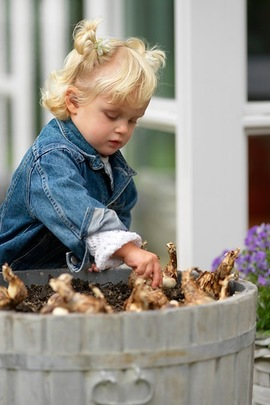 Bulbs planting, Fall planting, planting with kids