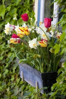 Container Ideas, Spring Container Ideas, Tulip Mustang,Tulip Curly Sue, Tulip Flaming Parrot, Narcissus Erlicheer, Leucojum Aestivum